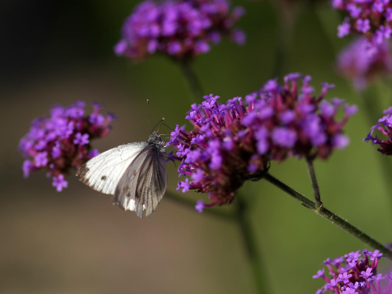 Blütenpracht im Hofanger (Foto: © Ulli Seer)